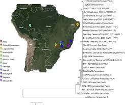 malignant catarrhal fever in brazilian cattle presenting with