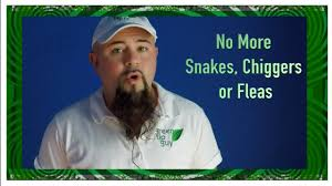 rid your yard of snakes chiggers u0026 fleas youtube