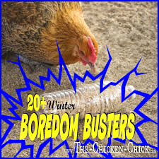 fresh eggs daily 10 winter boredom busters for chickens