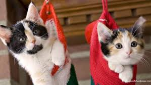 2012 cat christmas kitty image 327618 favim