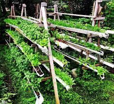 Vertical Garden Trellis - vertical gardening with the plant charmer part 1 s1e15 small