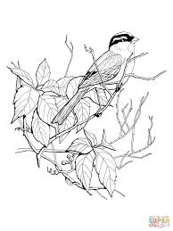pictures of sparrows coloring pages animal cartoon animals