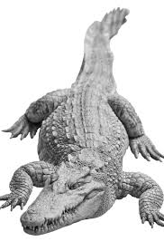 alligator claws a chlain croc of mythic proportions csi