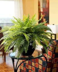 plants for decorating home home design plant living room img 2123 plants in within for 85