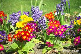 garden design garden design with flowers for a garden flower