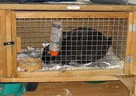 Rabbit Hutch For Multiple Rabbits Rabbit Hutches The Pet Wiki