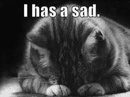 Sad Cat Memes - i has a sad cat memes and comics