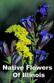 native iowa plants 7 best native plants images on pinterest native plants garden