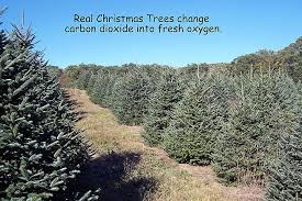 Washington Christmas Tree Farms - mcta member photos massachusetts christmas tree association