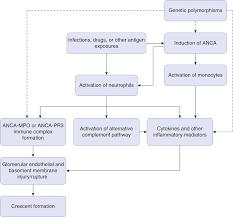 glomerular diseases associated with crescentic glomerulonephritis