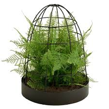 Fern Decor by Asparagus Fern Walmart Com