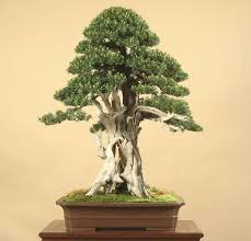 fobbs federation of bonsai