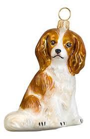 best 25 king spaniel ideas on cavalier king spaniel