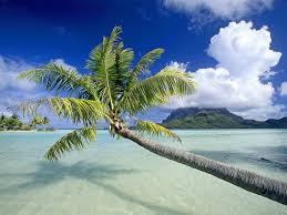 nature tropical island wallpaperwith awesome landscape view