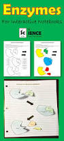 enzymes for interactive notebooks activity activities fun