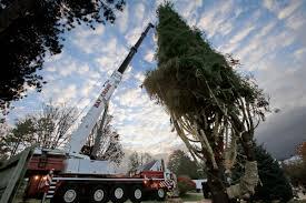 pennsylvania tree to adorn rockefeller center for 90 5