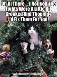 how to keep your cat out of the tree insurance matters