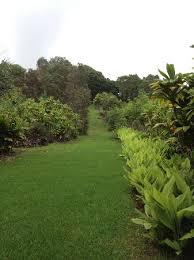 Kona Botanical Gardens The Top 10 Things To Do Near Kona Coffee Living History Farm