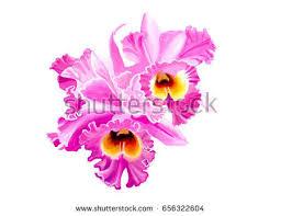 Orchid Bouquet Orchid Bouquet Stock Images Royalty Free Images U0026 Vectors