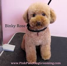haircutsfordogs poodlemix 46 best dog cuts images on pinterest animal candies and clothes