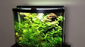 types of aquarium 100 types of aquarium file hk aquarium plaza quarry bay