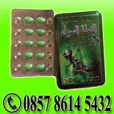 black ant king obat herbal alami di pekalongan