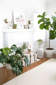 Fake Plants For Home Decor Living Room Plants For Living Room Inspirations Living Room