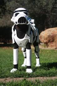 doberman pinscher dog dresses as star wars stormtrooper in amazing