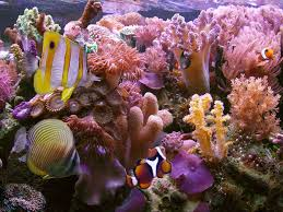 15 pics of amazing coral reefs and fishes coral reefs coral and 15 pics of amazing coral reefs and fishes