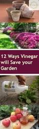12 ways vinegar will save your garden gardening hacks garden