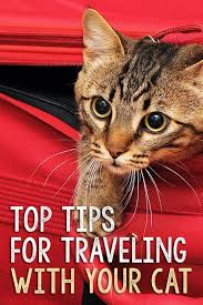 Oregon how to travel with a cat images 1570 best cats and kittens images adorable kittens jpg