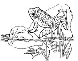 Clip Art Frogs Green Black Poison Dart Frog Coloring Page Frog Colouring Page