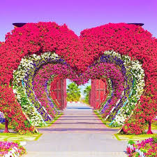 dubai miracle garden an impressive flower garden dubai flower