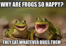 Meme Happy - why are frogs so happy meme