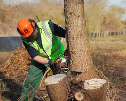 tree felling and brush clearance for south east water twig