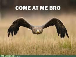 Funny Bird Memes - funny bird pics pictures 10