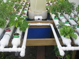 gorgeous ideas aquaponic garden simple decoration easy and healthy