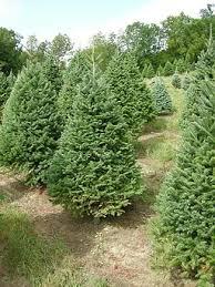 sunny hill farm cut your own christmas tree farm sussex county nj