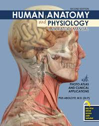 Human Anatomy And Physiology Lab Manual Marieb Human Anatomy And Physiology Atlas Periodic Tables
