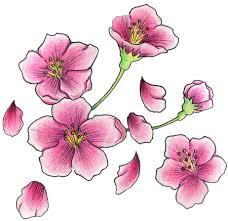 cherry blossom tattoos high quality photos and flash designs of