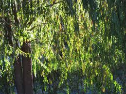 tree services easiest ornamental trees reliable tree care utah