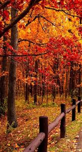 160 autumn images autumn art html