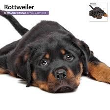rottweiler gifts com section rottweiler calendars