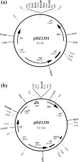 bifunctional plasmid vectors phz1351 a and phz1358 b bla