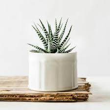 Modern White Planter by White Ceramic Planter Modern Texture Vase Succulent Planter