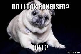 Confused Dog Meme - pug meme unnecessarily ambiguous pug meme generator do i look