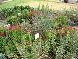 building a butterfly garden denton county master gardener