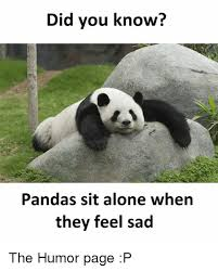 Sad Panda Meme - did you know pandas sit alone when they feel sad the humor page p