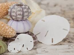 Shell Home Decor Buy Seashells Online Seashells For Home Decoration The
