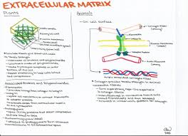 cell biology study guides ashley u0027s biology study guides